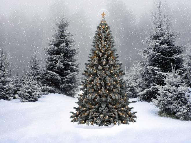 «Спасаем елки в Новый год!»